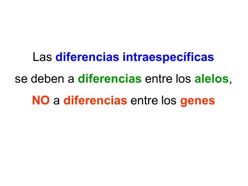 Las diferencias intraespecíficas se deben a diferencias entre los alelos, NO a diferencias entre los genes
