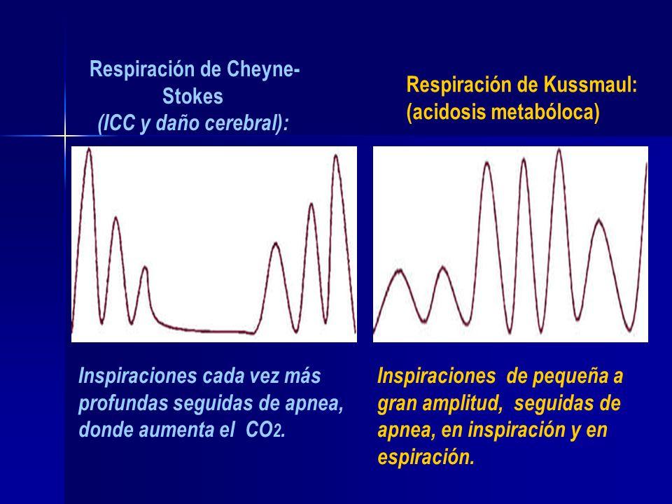 Respiración de Cheyne- Stokes (ICC y daño cerebral): Inspiraciones cada vez más profundas seguidas de apnea, donde aumenta el CO 2. Inspiraciones de p