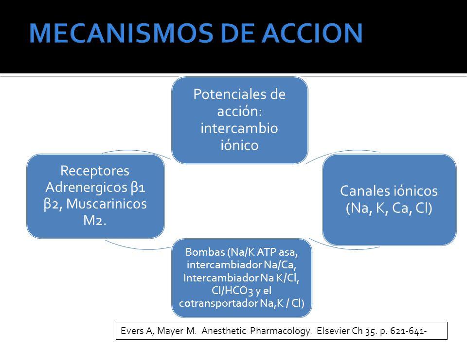 Potenciales de acción: intercambio iónico Canales iónicos (Na, K, Ca, Cl) Bombas (Na/K ATP asa, intercambiador Na/Ca, Intercambiador Na K/Cl, Cl/HCO3 y el cotransportador Na,K / Cl ) Receptores Adrenergicos β1 β2, Muscarinicos M2.