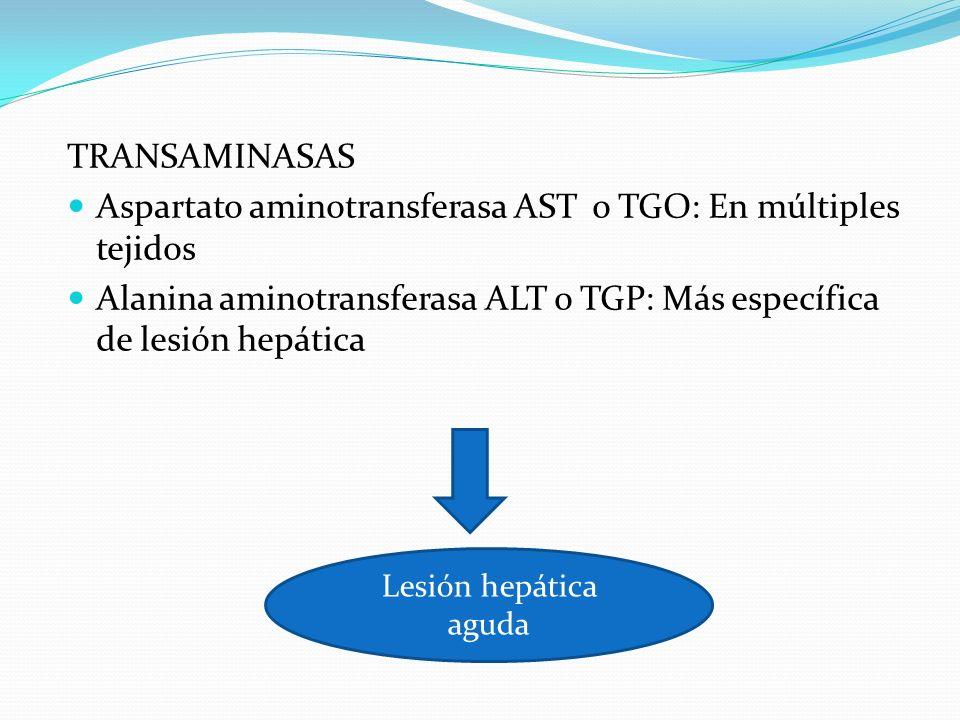 TRANSAMINASAS Aspartato aminotransferasa AST o TGO: En múltiples tejidos Alanina aminotransferasa ALT o TGP: Más específica de lesión hepática Lesión