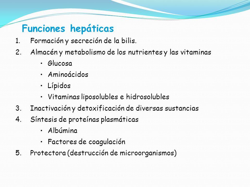 Funciones hepáticas 1.Formación y secreción de la bilis. 2.Almacén y metabolismo de los nutrientes y las vitaminas Glucosa Aminoácidos Lípidos Vitamin