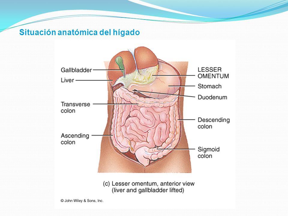 Función metabólica Los ácidos grasos son sintetizados en el hígado a partir de carbohidratos En el hígado se lleva a cabo la cetogénesis El hígado es el mayor sitio de síntesis de colesterol a partir de acetil coA Sintetiza las lipoproteínas transportadoras VLDL y HDL