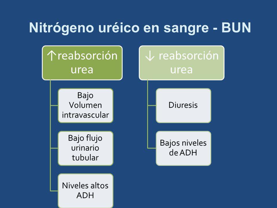 Nitrógeno uréico en sangre - BUN reabsorción urea Bajo Volumen intravascular Bajo flujo urinario tubular Niveles altos ADH reabsorción urea Diuresis B
