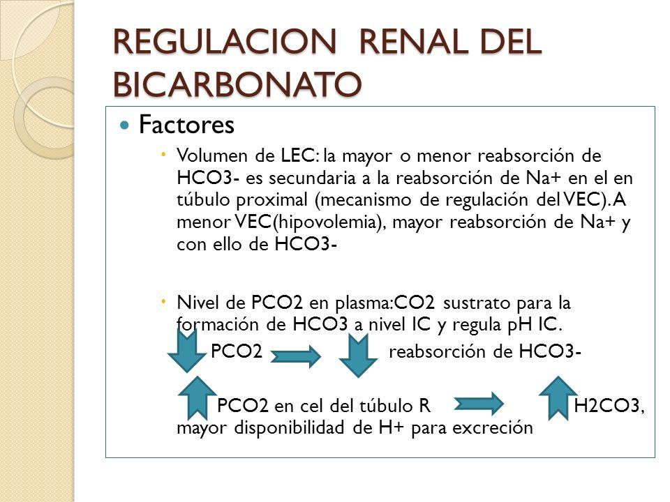 REGULACION RENAL DEL BICARBONATO Factores Volumen de LEC: la mayor o menor reabsorción de HCO3- es secundaria a la reabsorción de Na+ en el en túbulo