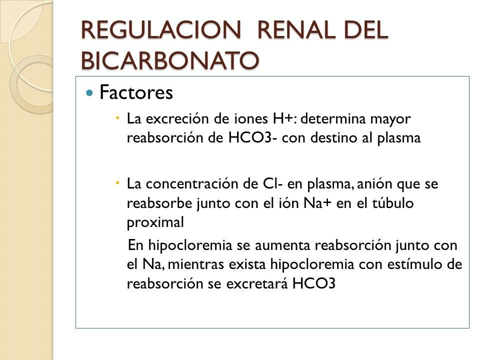 REGULACION RENAL DEL BICARBONATO Factores La excreción de iones H+: determina mayor reabsorción de HCO3- con destino al plasma La concentración de Cl-