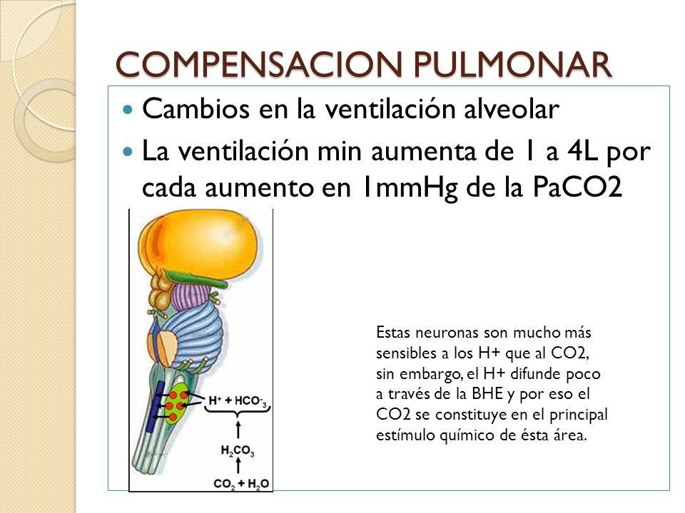 COMPENSACION PULMONAR Cambios en la ventilación alveolar La ventilación min aumenta de 1 a 4L por cada aumento en 1mmHg de la PaCO2 Estas neuronas son