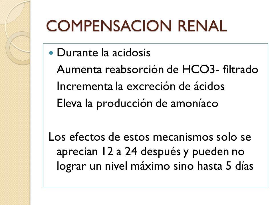 COMPENSACION RENAL Durante la acidosis Aumenta reabsorción de HCO3- filtrado Incrementa la excreción de ácidos Eleva la producción de amoníaco Los efe