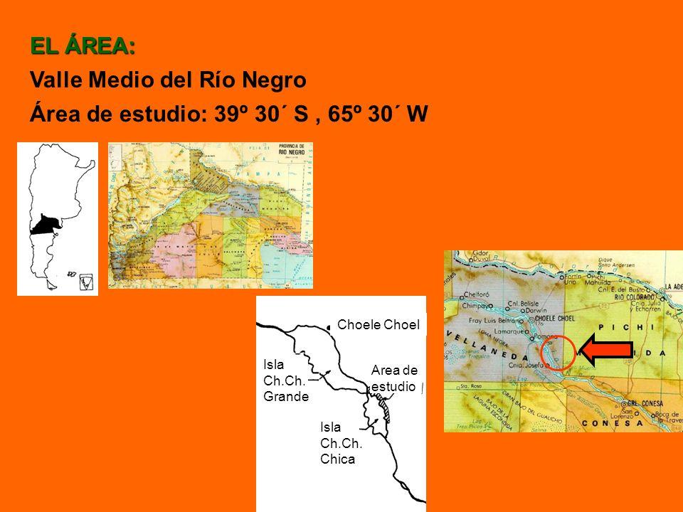 EL ÁREA: Valle Medio del Río Negro Área de estudio: 39º 30´ S, 65º 30´ W Choele Choel Isla Ch.Ch. Grande Isla Ch.Ch. Chica Area de estudio