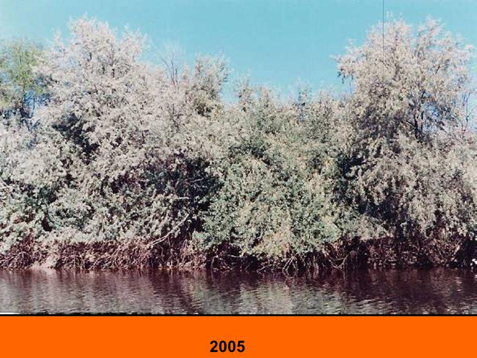 Valle Medio Sequía 2009 - 2011