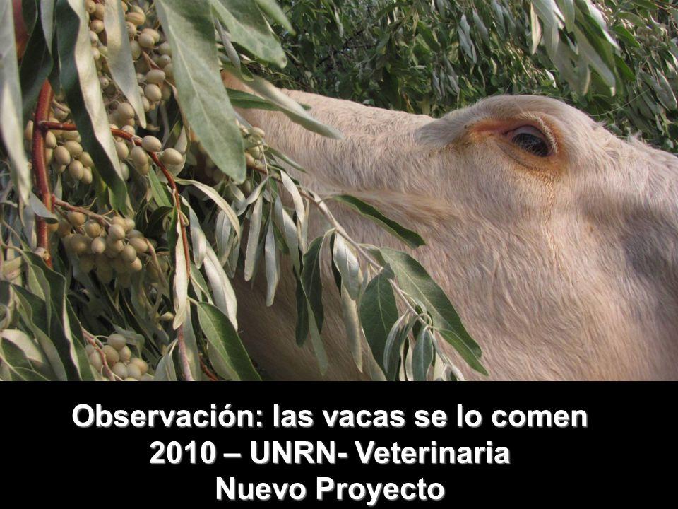 Observación: las vacas se lo comen 2010 – UNRN- Veterinaria Nuevo Proyecto