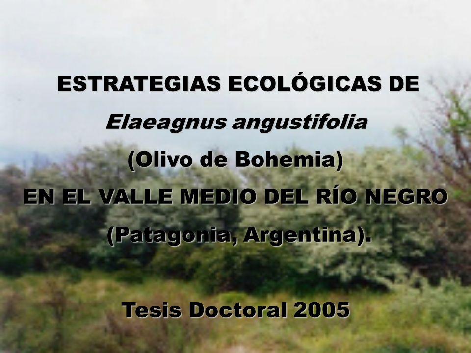 Fundamentos Comunidad Vegetal Cambios cantidad relativa Introducción especies foráneas Éxito = proliferación y persistencia Invasoras Adaptación Agresividad Malezas .