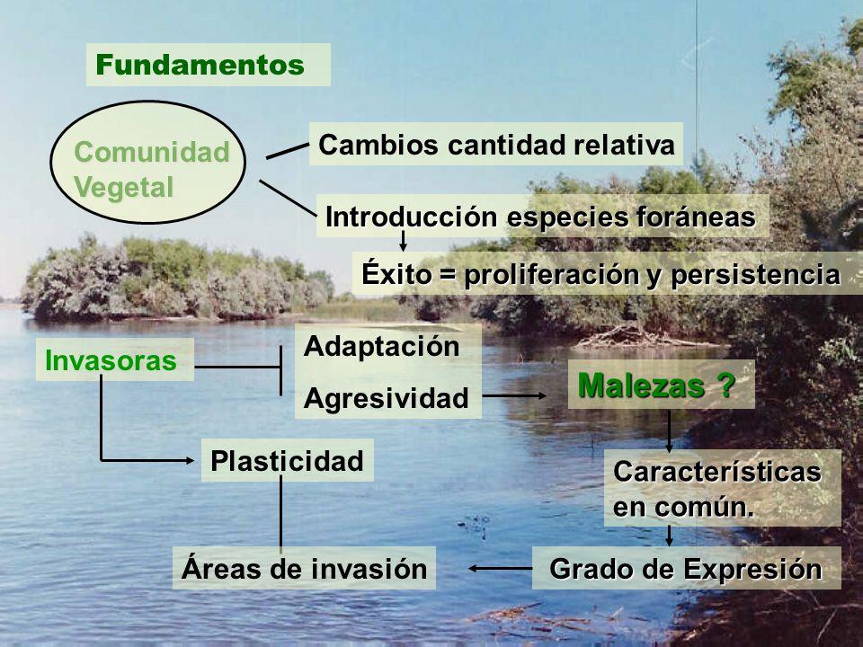 El éxito de la colonización de Elaeagnus angustifolia (olivo de Bohemia) en el Valle Medio del Río Negro es el resultado de la expresión conjunta de varias estrategias ecológicas de la especie