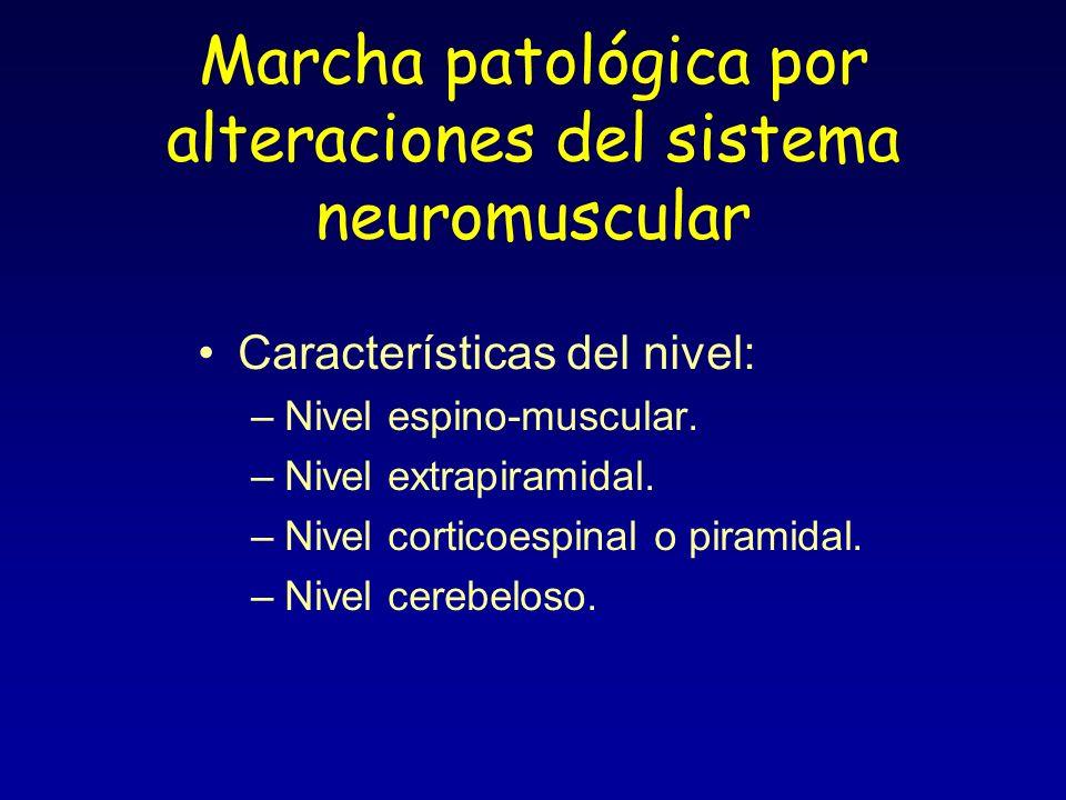 Marcha patológica por alteraciones del sistema neuromuscular Características del nivel: –Nivel espino-muscular. –Nivel extrapiramidal. –Nivel corticoe