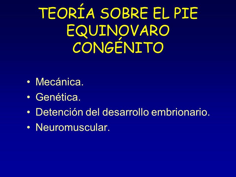 TEORÍA SOBRE EL PIE EQUINOVARO CONGÉNITO Mecánica. Genética. Detención del desarrollo embrionario. Neuromuscular.