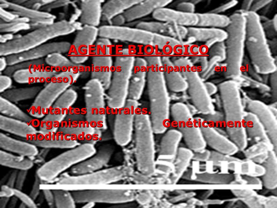 AGENTE BIOLÓGICO (Microorganismos participantes en el proceso). Mutantes naturales. Mutantes naturales. Organismos Genéticamente modificados. Organism