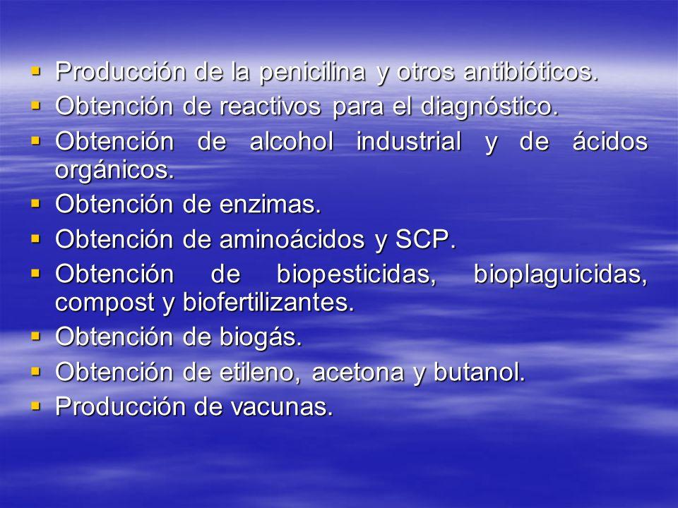 Producción de la penicilina y otros antibióticos. Producción de la penicilina y otros antibióticos. Obtención de reactivos para el diagnóstico. Obtenc
