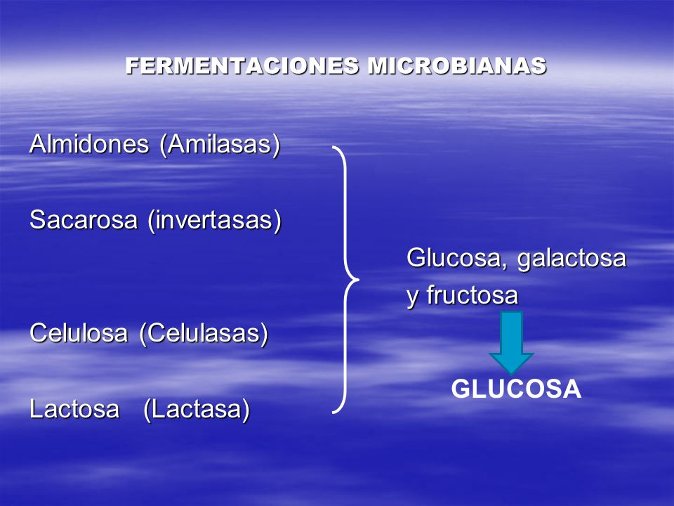 FERMENTACIONES MICROBIANAS Almidones (Amilasas) Sacarosa (invertasas) Glucosa, galactosa Glucosa, galactosa y fructosa y fructosa Celulosa (Celulasas)