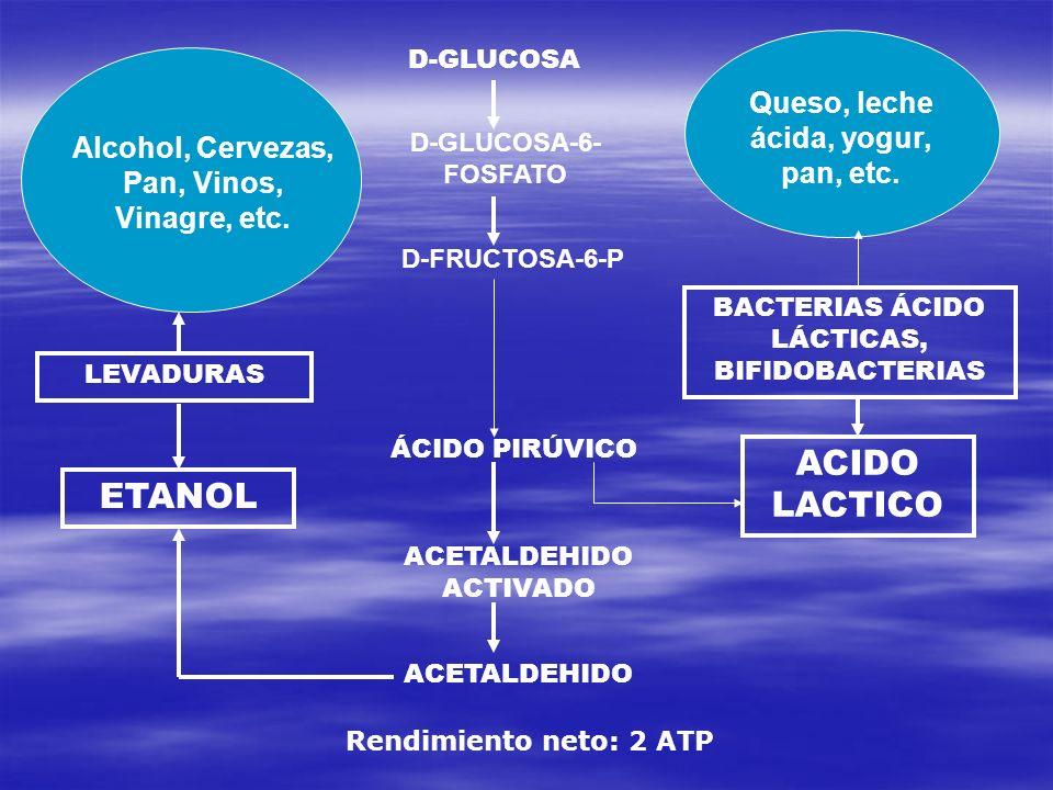 D-GLUCOSA D-GLUCOSA-6- FOSFATO D-FRUCTOSA-6-P ÁCIDO PIRÚVICO ACETALDEHIDO ACTIVADO ACETALDEHIDO ETANOL ACIDO LACTICO LEVADURAS BACTERIAS ÁCIDO LÁCTICA