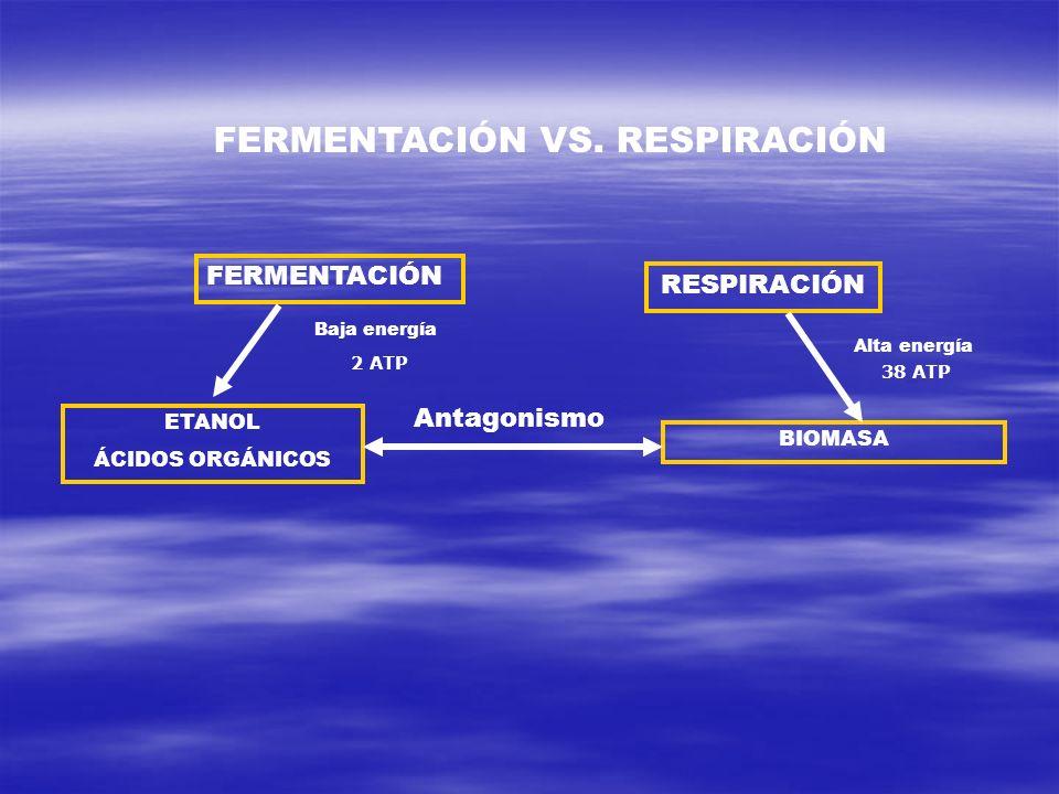 FERMENTACIÓN RESPIRACIÓN ETANOL ÁCIDOS ORGÁNICOS BIOMASA Baja energía Alta energía Antagonismo 2 ATP 38 ATP FERMENTACIÓN VS. RESPIRACIÓN