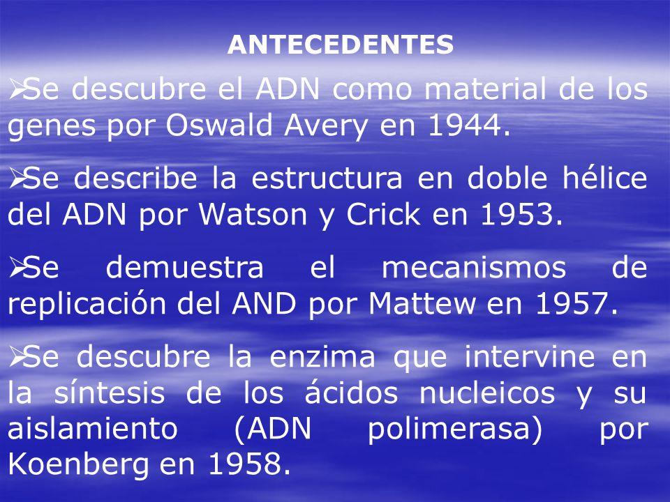 ANTECEDENTES Se descubre el ADN como material de los genes por Oswald Avery en 1944. Se describe la estructura en doble hélice del ADN por Watson y Cr