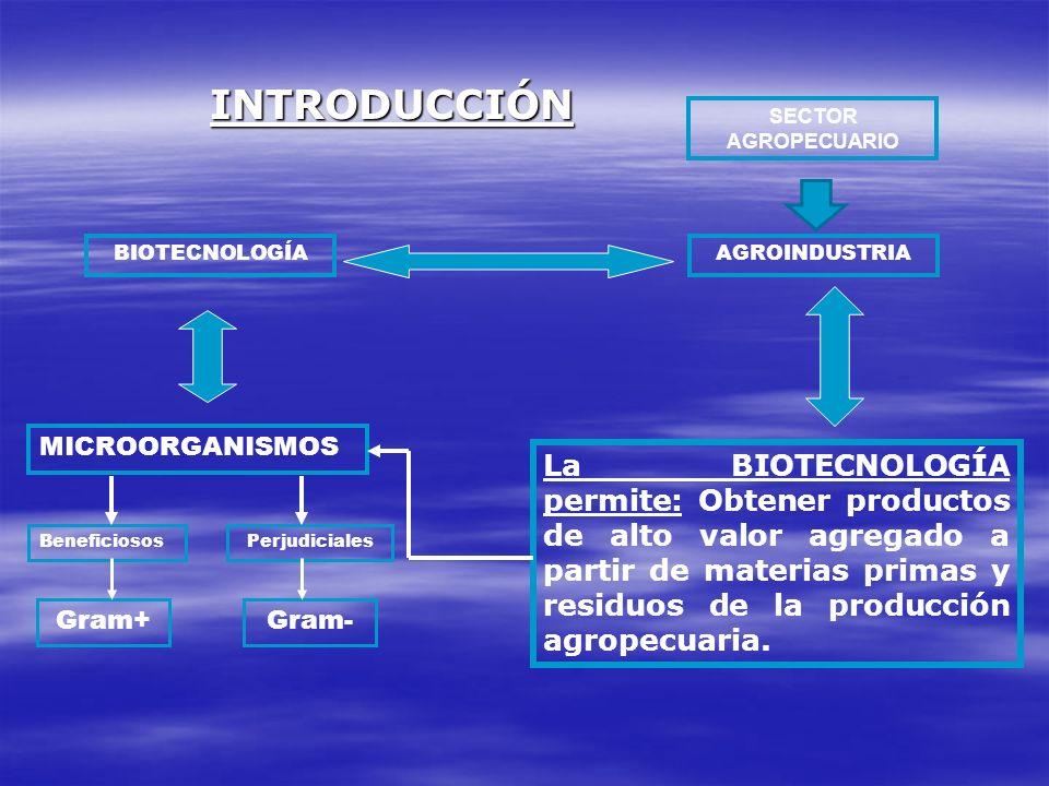 BIOTECNOLOGÍAAGROINDUSTRIA La BIOTECNOLOGÍA permite: Obtener productos de alto valor agregado a partir de materias primas y residuos de la producción