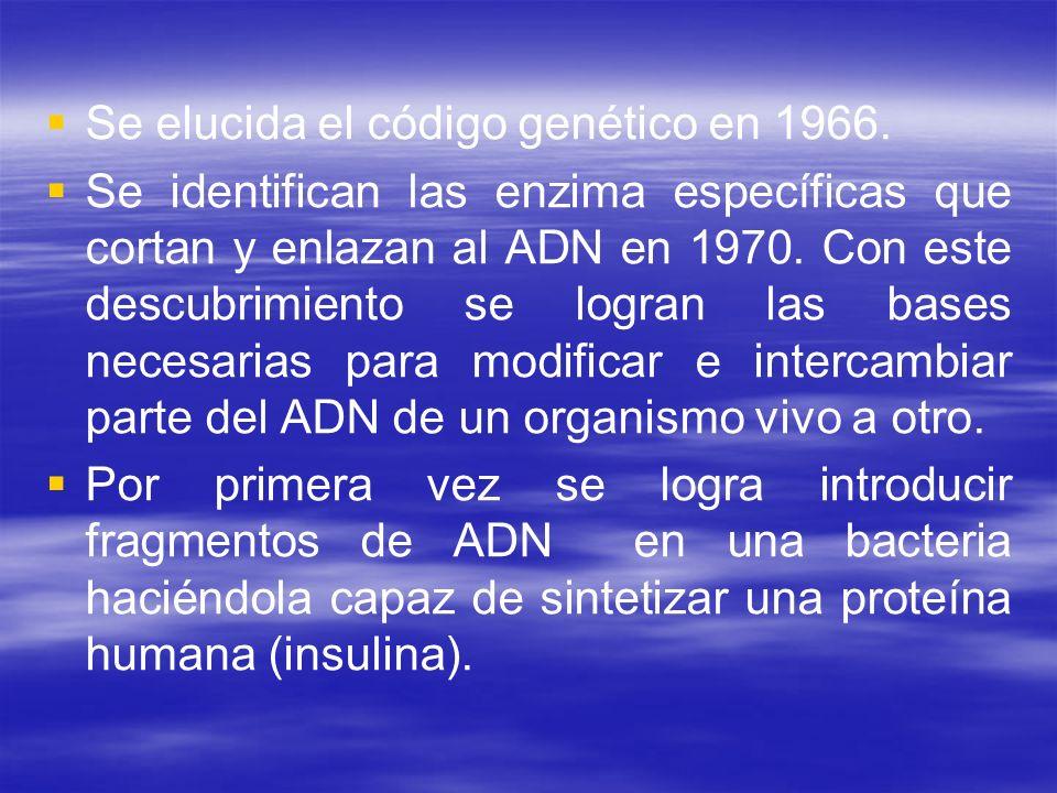 Se elucida el código genético en 1966. Se identifican las enzima específicas que cortan y enlazan al ADN en 1970. Con este descubrimiento se logran la