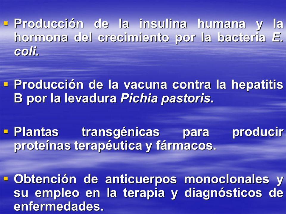 Producción de la insulina humana y la hormona del crecimiento por la bacteria E. coli. Producción de la insulina humana y la hormona del crecimiento p