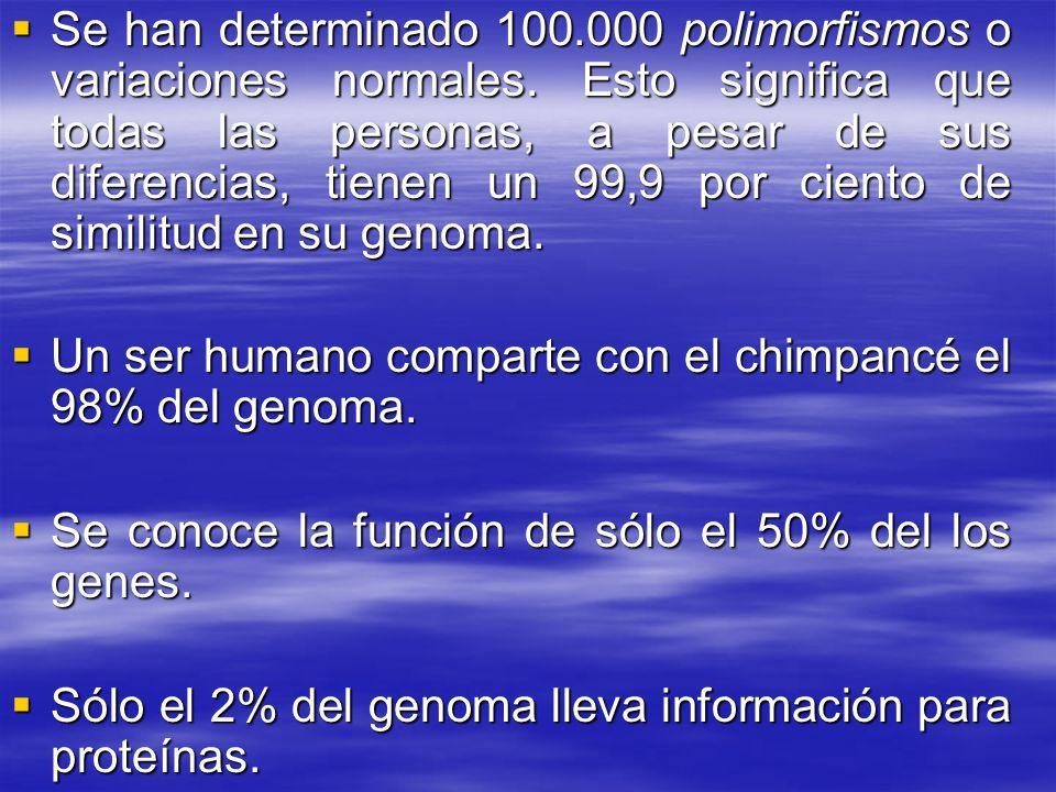 Se han determinado 100.000 polimorfismos o variaciones normales. Esto significa que todas las personas, a pesar de sus diferencias, tienen un 99,9 por