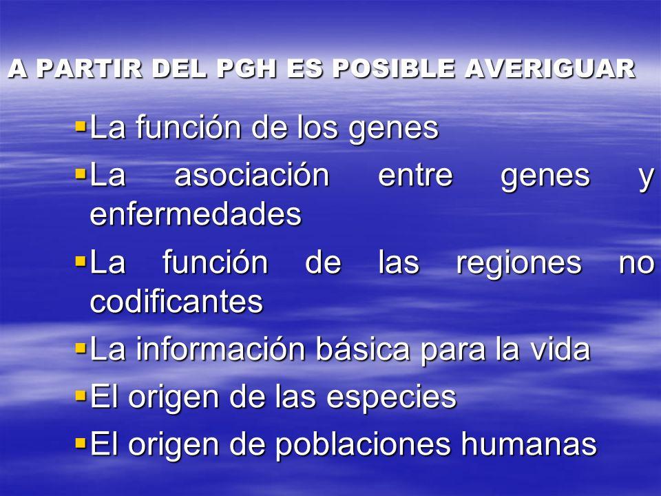 A PARTIR DEL PGH ES POSIBLE AVERIGUAR La función de los genes La función de los genes La asociación entre genes y enfermedades La asociación entre gen