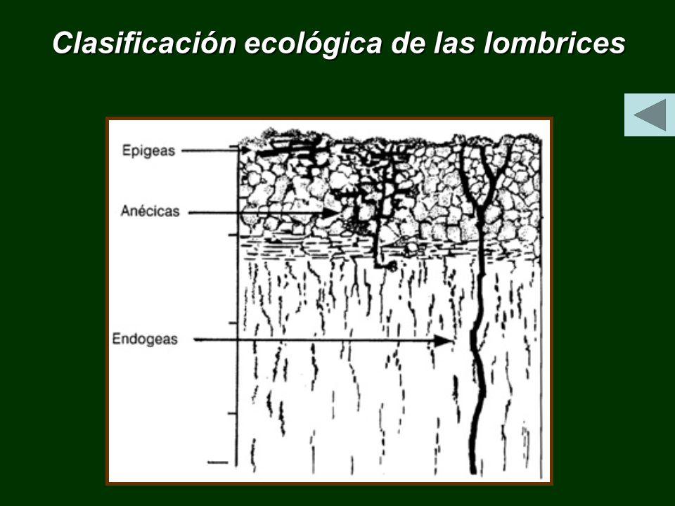 Clasificación ecológica de las lombrices