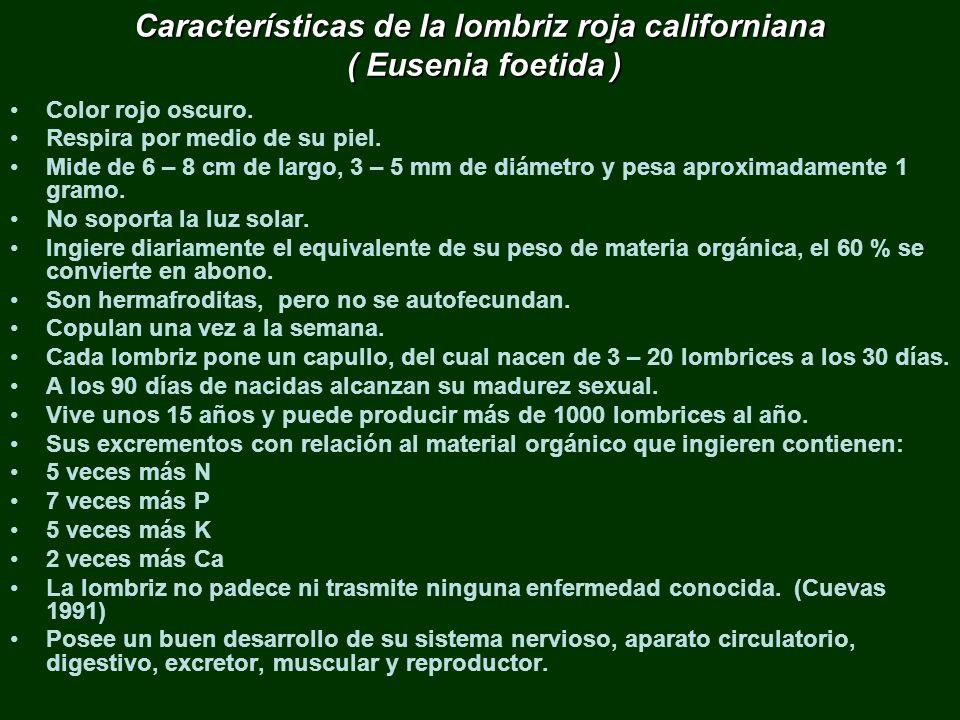 Características de la lombriz roja californiana ( Eusenia foetida ) Color rojo oscuro. Respira por medio de su piel. Mide de 6 – 8 cm de largo, 3 – 5