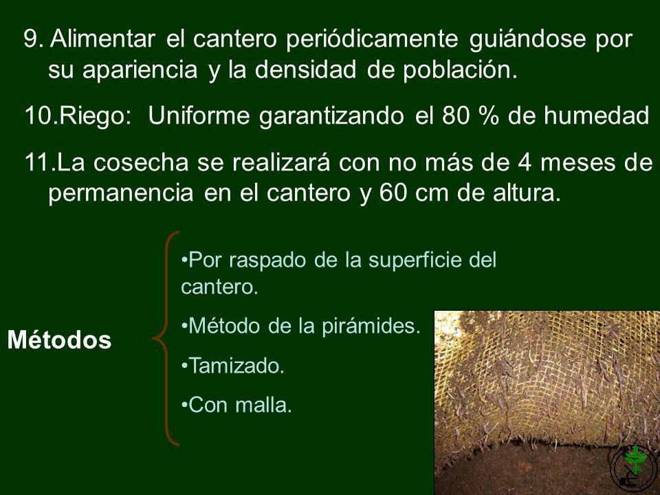 9. Alimentar el cantero periódicamente guiándose por su apariencia y la densidad de población. 10.Riego: Uniforme garantizando el 80 % de humedad 11.L