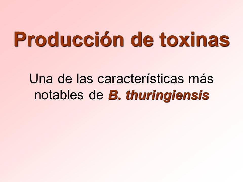 Producción de toxinas B. thuringiensis Una de las características más notables de B. thuringiensis