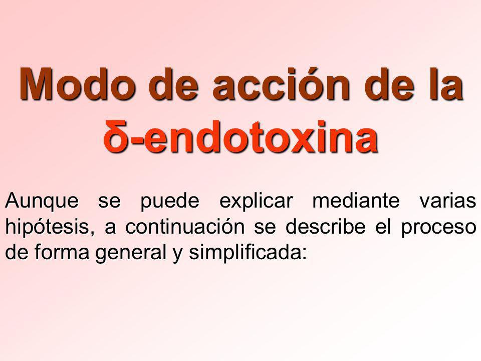 Modo de acción de la δ-endotoxina Aunque se puede explicar mediante varias hipótesis, a continuación se describe el proceso de forma general y simplificada: