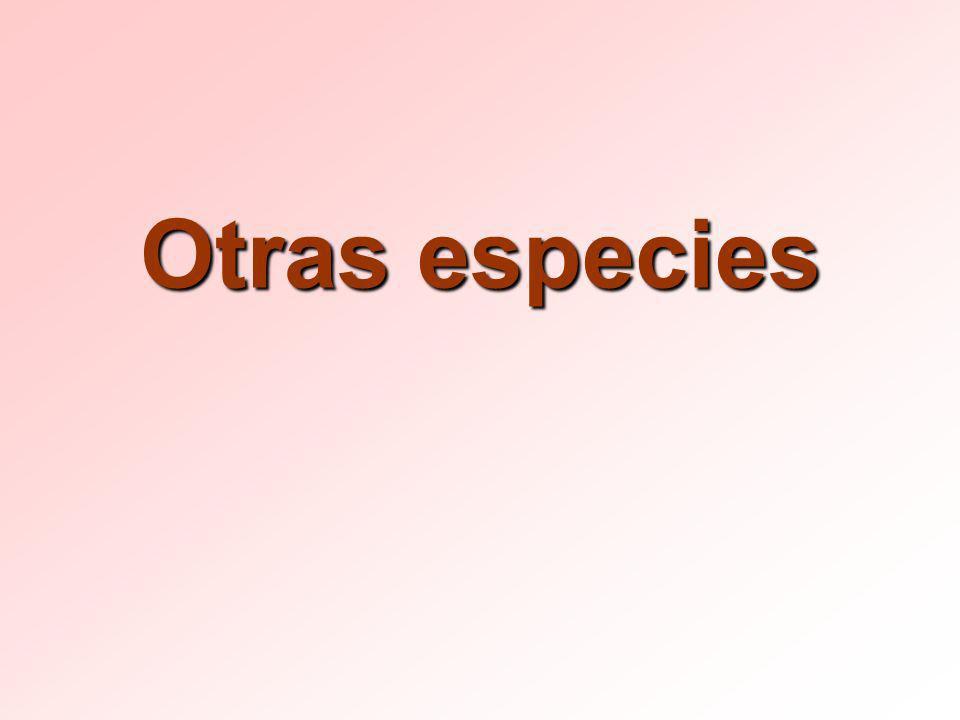 Otras especies
