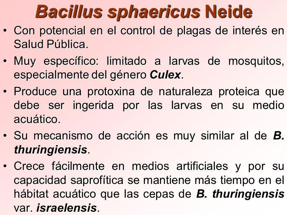 Bacillus sphaericus Neide Con potencial en el control de plagas de interés en Salud Pública.Con potencial en el control de plagas de interés en Salud Pública.