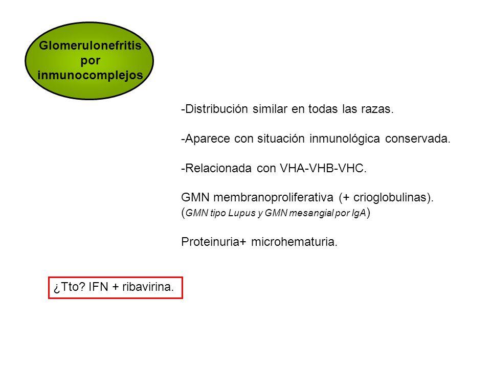 Glomerulonefritis por inmunocomplejos -Distribución similar en todas las razas. -Aparece con situación inmunológica conservada. -Relacionada con VHA-V
