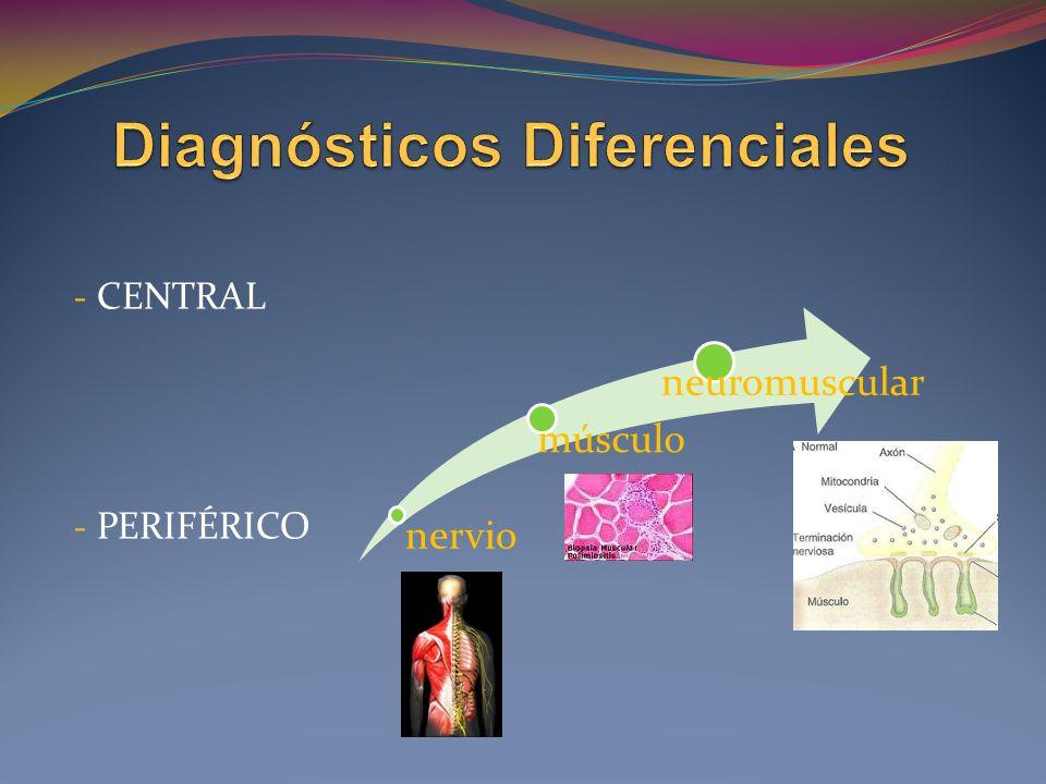 - CENTRAL - PERIFÉRICO nervio músculo neuromuscular