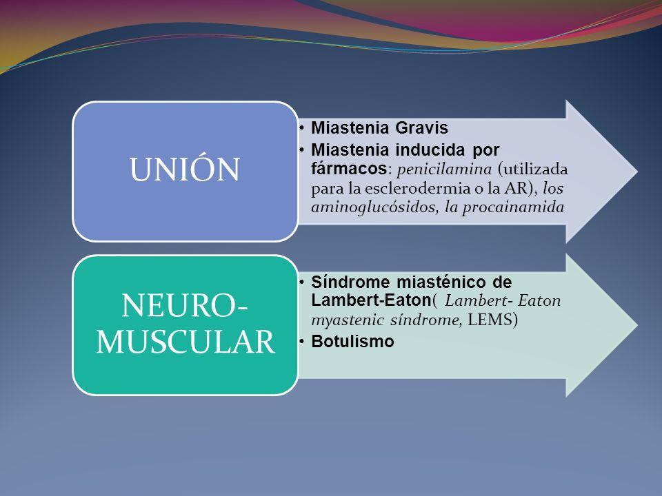 Miastenia Gravis Miastenia inducida por fármacos : penicilamina (utilizada para la esclerodermia o la AR), los aminoglucósidos, la procainamida UNIÓN Síndrome miasténico de Lambert-Eaton ( Lambert- Eaton myastenic síndrome, LEMS) Botulismo NEURO- MUSCULAR