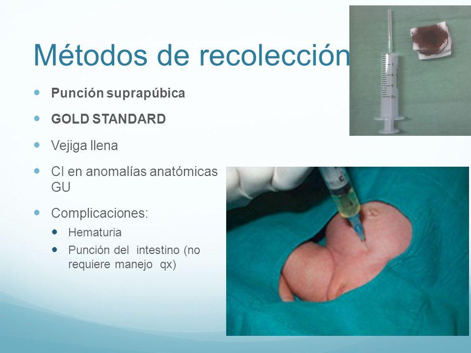 Métodos de recolección Punción suprapúbica GOLD STANDARD Vejiga llena CI en anomalías anatómicas GU Complicaciones: Hematuria Punción del intestino (n