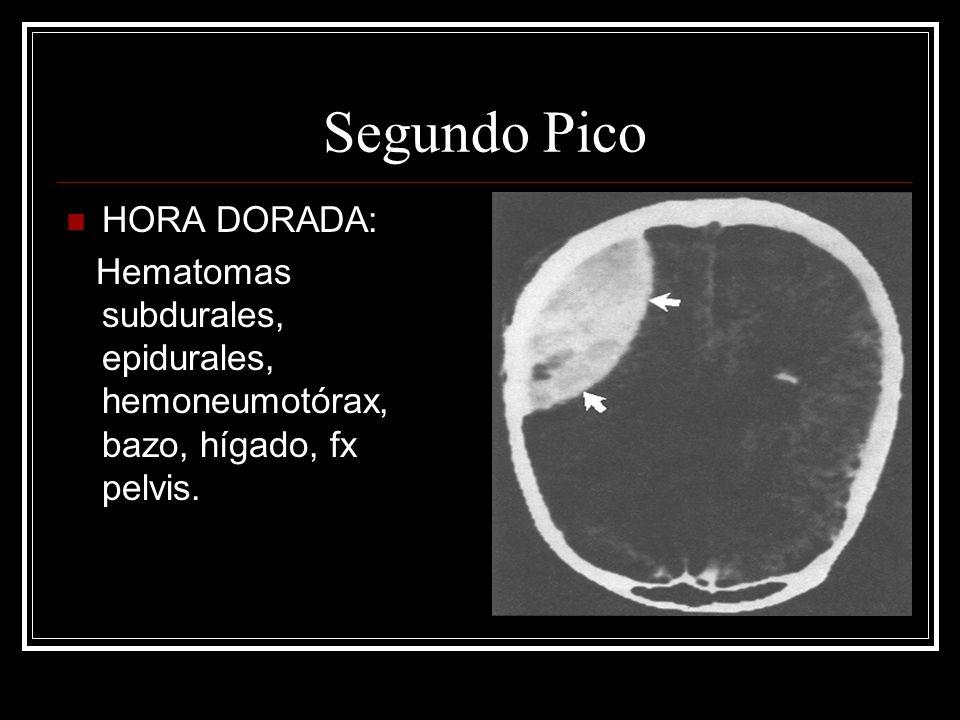 CIRCULACION Y HEMORRAGIA CONCIENCIA PERFUSION PULSO CENTRALES BILATERAL AMPLITUD, FREC, RITMO COLOR CENIZO, PALIDO EXTREM ROSADO CARA EXTREM