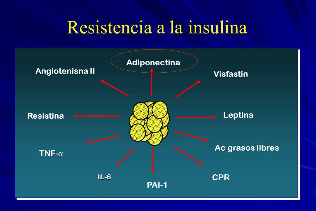 Resistencia a la insulina Angiotenisna II Adiponectina Resistina TNF- Visfastin Leptina CPR PAI-1 IL-6 Ac grasos libres