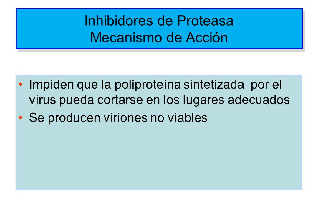 Inhibidores de Proteasa Mecanismo de Acción Impiden que la poliproteína sintetizada por el virus pueda cortarse en los lugares adecuados Se producen v