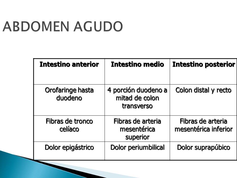ABDOMEN AGUDO Intestino anterior Intestino medio Intestino posterior Orofaringe hasta duodeno 4 porción duodeno a mitad de colon transverso Colon dist