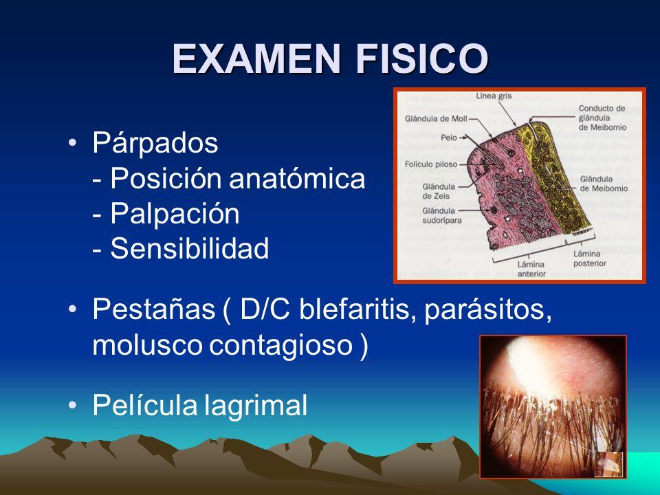 EXAMEN FISICO Párpados - Posición anatómica - Palpación - Sensibilidad Pestañas ( D/C blefaritis, parásitos, molusco contagioso ) Película lagrimal