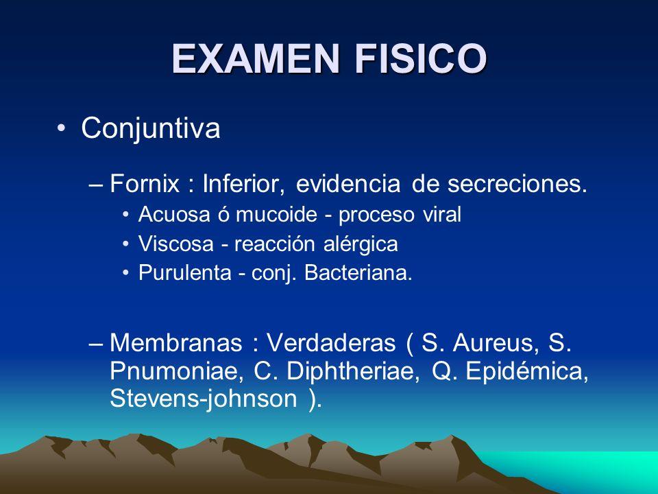 EXAMEN FISICO Conjuntiva –Fornix : Inferior, evidencia de secreciones. Acuosa ó mucoide - proceso viral Viscosa - reacción alérgica Purulenta - conj.