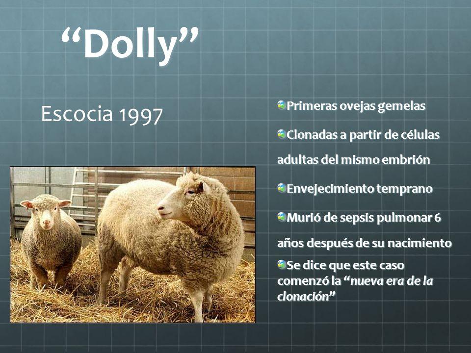 Dolly Primeras ovejas gemelas Clonadas a partir de células adultas del mismo embrión Envejecimiento temprano Murió de sepsis pulmonar 6 años después d