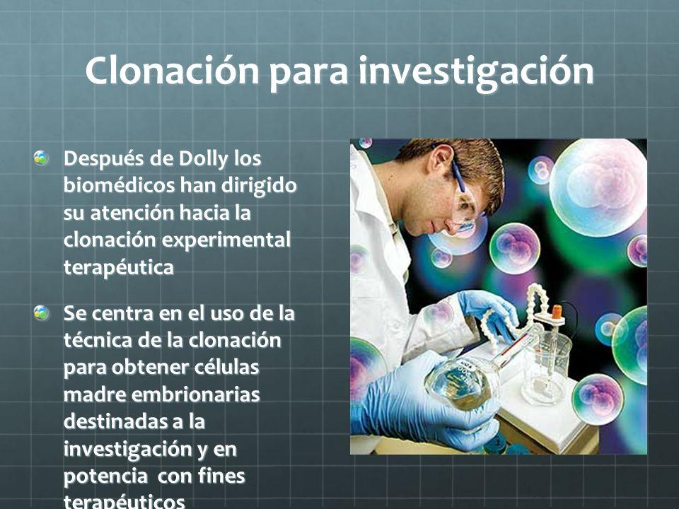 Clonación para investigación Después de Dolly los biomédicos han dirigido su atención hacia la clonación experimental terapéutica Se centra en el uso