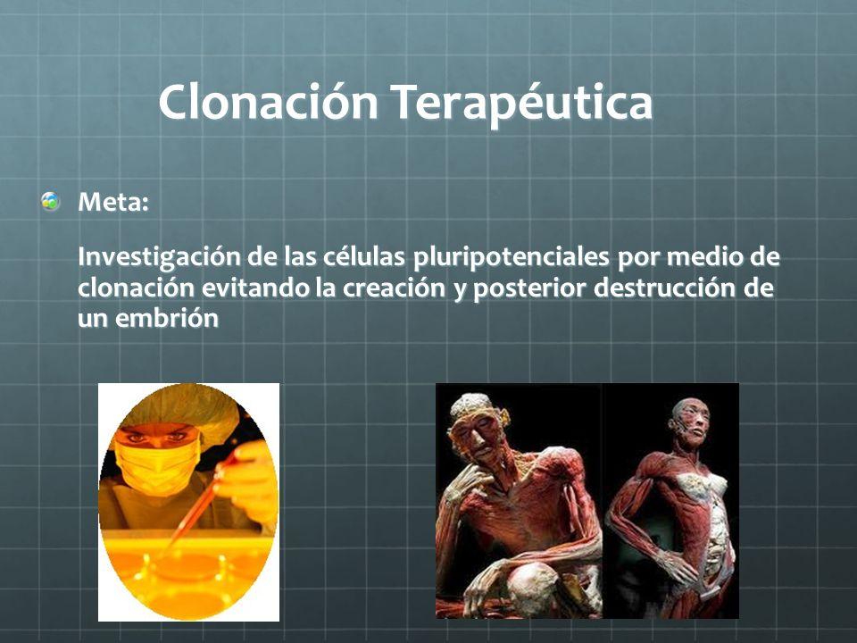 Clonación Terapéutica Meta: Investigación de las células pluripotenciales por medio de clonación evitando la creación y posterior destrucción de un em