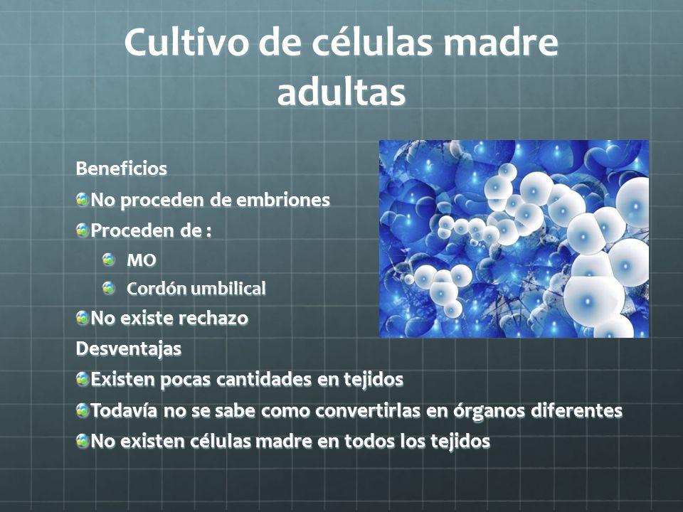 Cultivo de células madre adultas Beneficios No proceden de embriones Proceden de : MO Cordón umbilical No existe rechazo Desventajas Existen pocas can